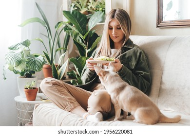 Young caucasian woman with dog sitting on couch in living room with plants at home. Beautiful girl holding a plate with vegetable sandwiches. Relaxing in cozy home, healthy lifestyle concept