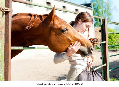 Junge fröhliche jugendliche Rotkopfmädchen mit ihrem liebsten Kastanienpferd und ihrem kleinen Hund. Lebhaftes, farbiges Außenbild.