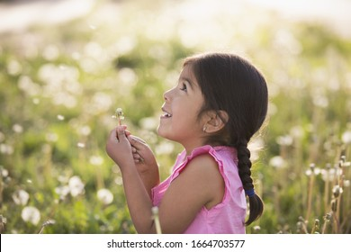A young child in a field of flowers, blowing the fluffy seeds off a dandelion seedhead clock.