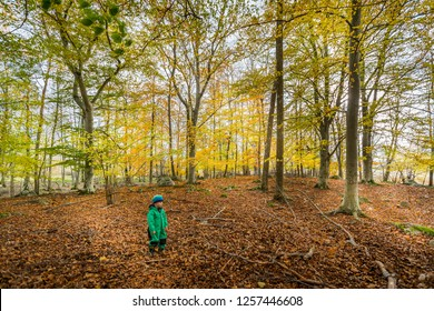 Young child with winter clothing in a beautiful colorful and yellow autumn beech leaf forest