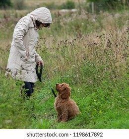 A young cockapoo puppy sitting in a field waiting to get a treat from its female owner.