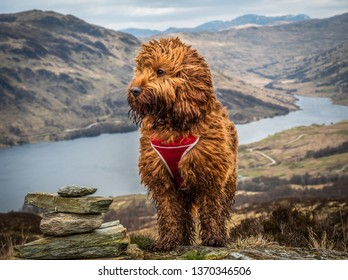 A young cockapoo standing near a cairn above Loch Finglas in the Trossachs National Park