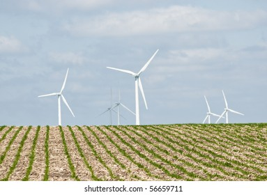 Young corn field in the foreground on a hot summer day with wind turbines in the background. located on farmland near Lake Benton Minnesota.