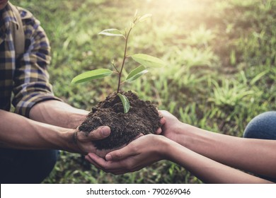 Young couple carrying a seedlings to be planted into the soil in the garden as save world concept, nature, environment and ecology.