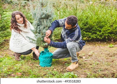 Young Couple Choosing Fir Tree for Christmas at the farm of fir trees
