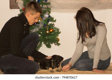 Young couple have fun with cute puppy