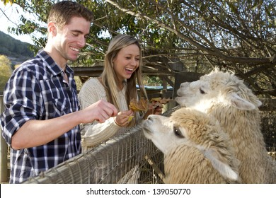 A young couple on a date at a petting zoo.