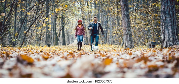 Young couple walking with their dog in a colorful autumn forest having fun outdoors