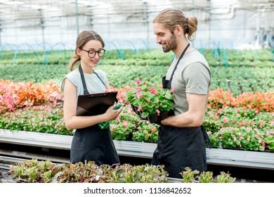 Young couple of workers taking care of flowers in the greenhouse of plant production