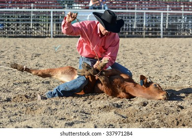 Young cowboy tying up a calf's legs during a rodeo.