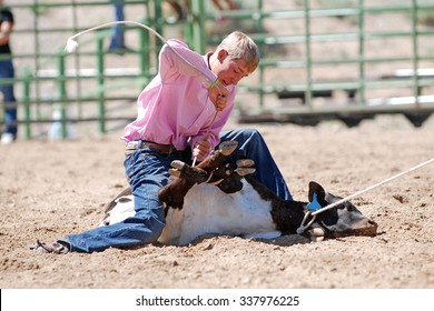 Young cowboy tying the legs of a calf during a rodeo.