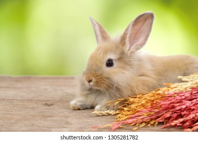 young cute brown easter bunny rabbit with colorful grass on on wood and green nature background