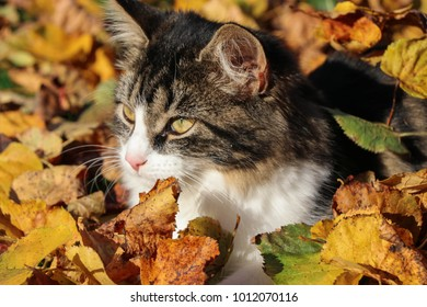 young, cute cat in autumnal garden between foliage leaves