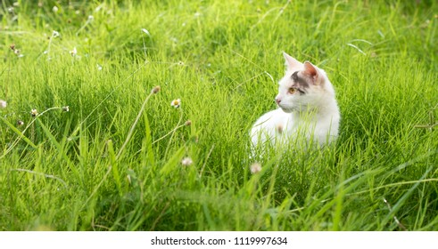 Young cute cat in a green grass field