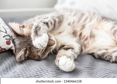 Young, cute cat sleeps on the bed and closes its eyes with its paw from the daylight that comes from the window. Close-up.