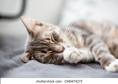 Young, cute cat sleeps on the bed in the daylight that comes from the window. Close-up.