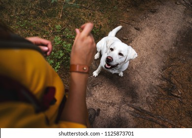 young cute labrador retriever dog puppy sitting in the forest in front of woman with dog food