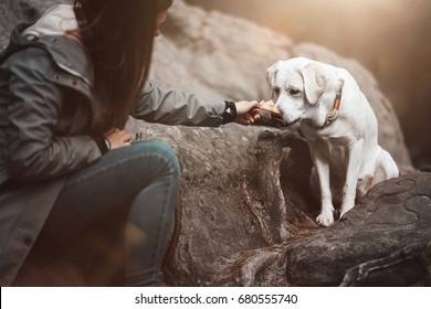 young cute labrador retriever dog puppy gets some food from a woman