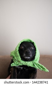 young cute puppy sitting on black couch with cloth on its head