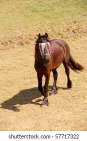 A young dark brown horse with a fly mask