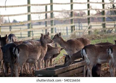 young deer gathering near feeding trough in park