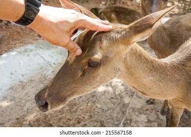 Young  Deer head handles