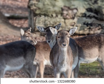 Young deer on a clear morning in Vejle, Denmark