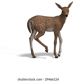 young doe or fawn With Clipping Path and shadow