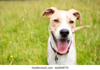 Young Dog in Off-Leash Dog Park with Big Smile