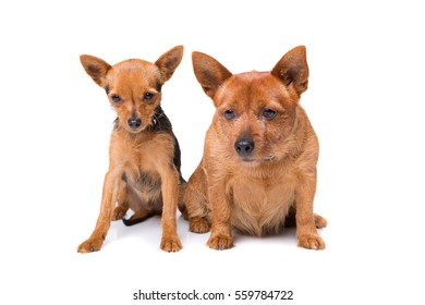 young dog and old dog sitting in front of a white background