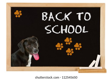 Young dog on blackboard - back to school