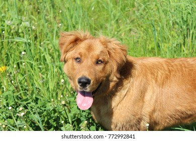 young dog on walks