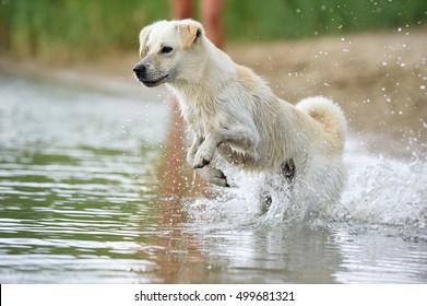 young dog playing on beach  sea splash water