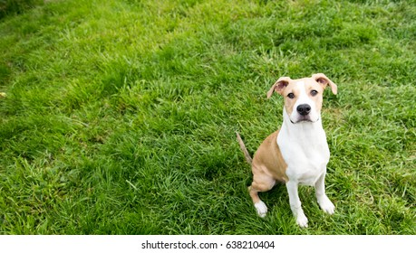 Young Dog Sitting on Green Loa
