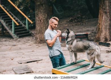 young dog trainer with obedient husky on dog walk obstacle