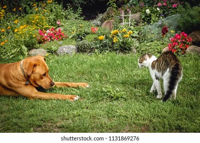 Young dog tries to play with cat in the garden