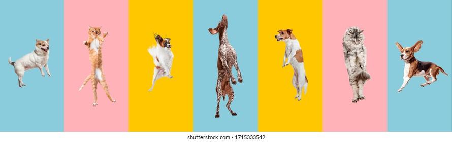 Junge Hunde springen, spielen, fliegen. Feine Hunde oder Haustiere sehen glücklich aus, einzeln auf buntem oder Farbverlauf-Hintergrund. Studio. Kreative Kollage verschiedener Hunderassen. Flyer für Ihre Anzeige.