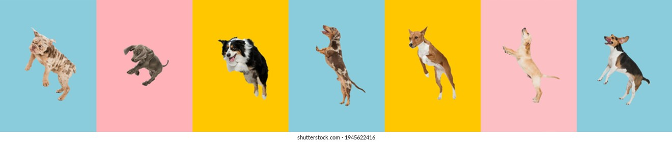 Young dogs are posing. Cute doggies or pets jumping high on multicolored background. Studio photoshots. Creative collage of different breeds of dogs. Flyer for your ad.