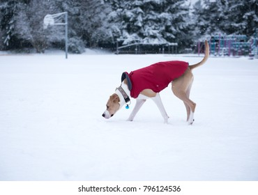 Young Dogs Running and Playing in Snow