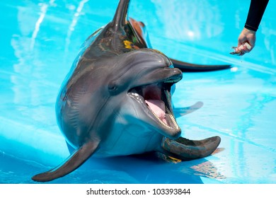 A young dolphin close-up