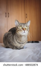 Young domestic cat sitting on the mattress and looking intently