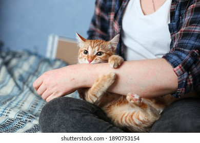 Young domestic red cat bites woman's hand. Blue bed. Day light