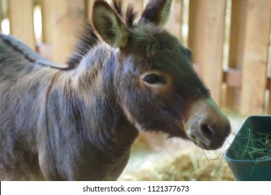 young donkey jackass mammal domestic farm animal country
