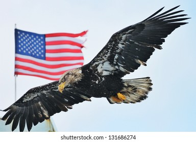 Young Eagle and flag