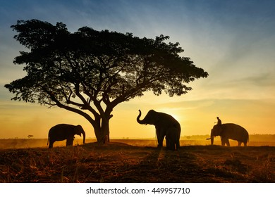 Young elephant and Man on the mist sunrise in the field