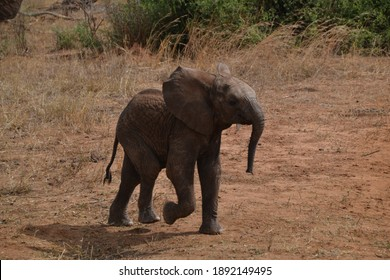 Young elephant in the Serengetti  in Tanzania
