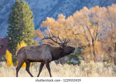 Young elk on a background of trees