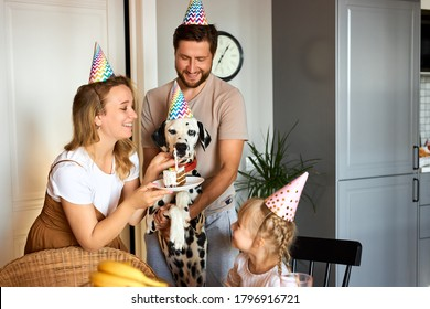 young family with daughter celebrate pet's birthday, friendly man, woman and child girl love their dalmatian dog, at home in party hats