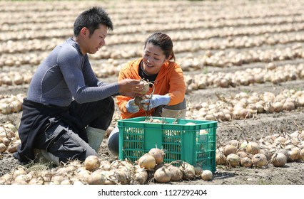 A young farmer couple harvesting onions