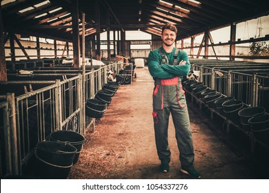 Young farmer in a cowshed on a dairy farm.